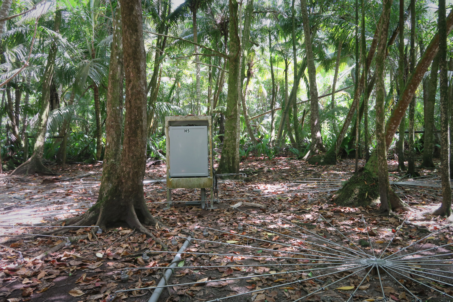 An array system in a rainforest.
